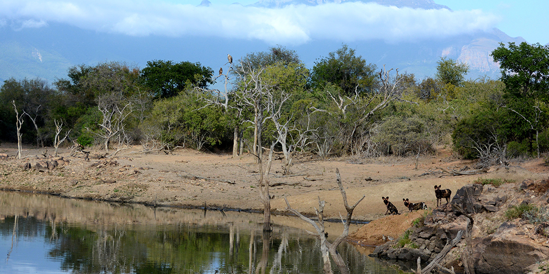 Endangered Wildlife Trust - Wild Dog Update for the Kruger National Park and Surrounding Areas